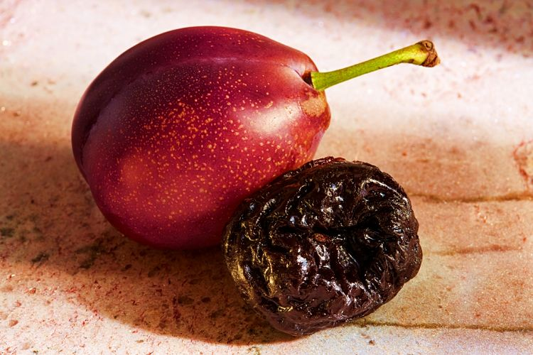 Most of the nutrients and health benefits of fresh plums are retained in prunes and are concentrated.    Dried fruit may be less expensive than fresh fruit when the dehydration is taken into account