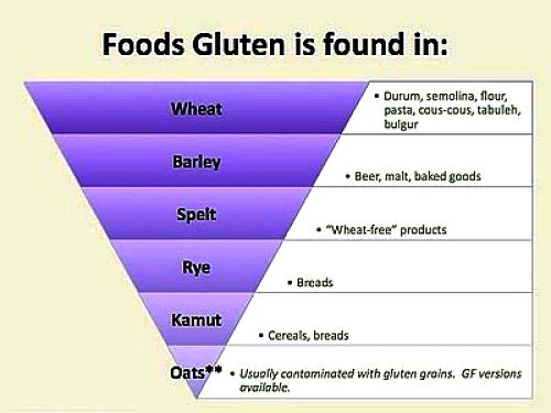How the amount of gluten varies between various types of grains