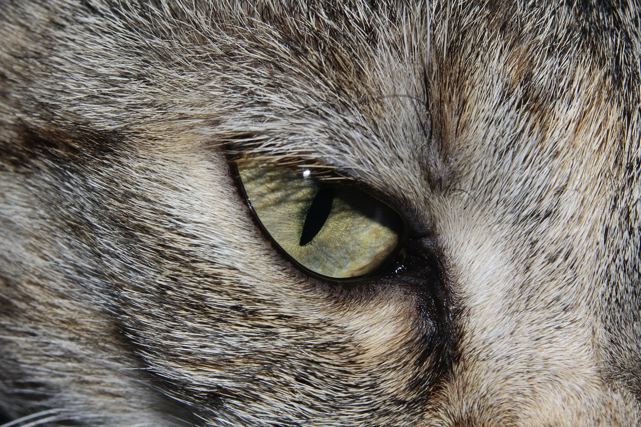 Lovely eyes 2