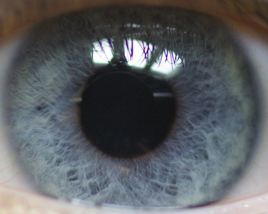 The lights reflected in the eyes reveal all
