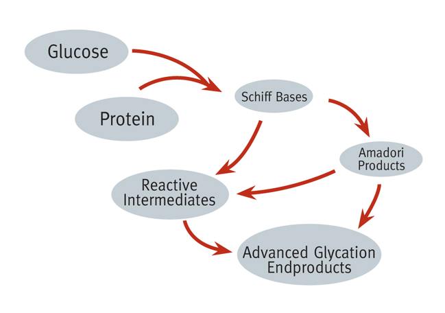 Glycotoxins form when a sugar molecule is bound to a lipid or protein molecule, ofter when food is caramelized or overcooked
