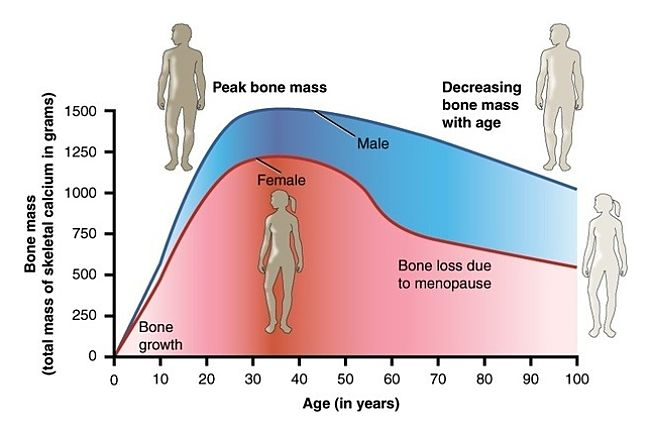 Changes in bone density with age in men and women
